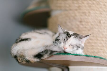 Sleeping cat - perfect dream Stock Photo