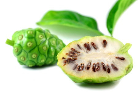 great morinda: Great morinda fruit, Morinda citrifolia, Family Rubiaceae, Central of Thailand