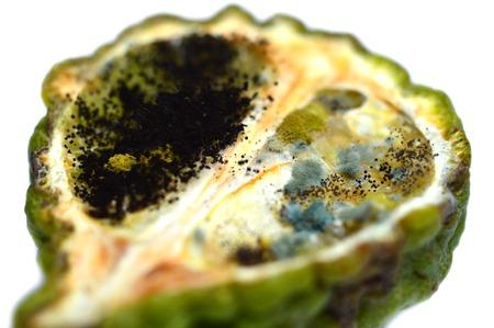 eukaryotic: Fungi on kaffir lime on white background