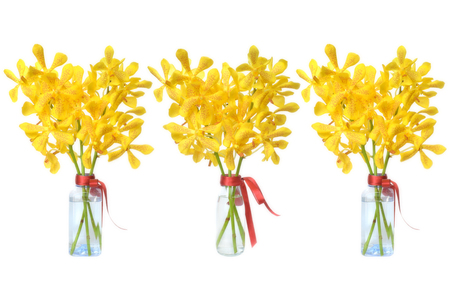 epiphytic: Yellow mokara orchid from Central of Thailand Stock Photo