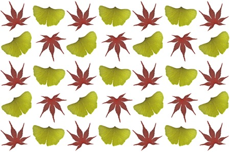 Japanese maple and ginkgo leaves on white background 版權商用圖片 - 86572328