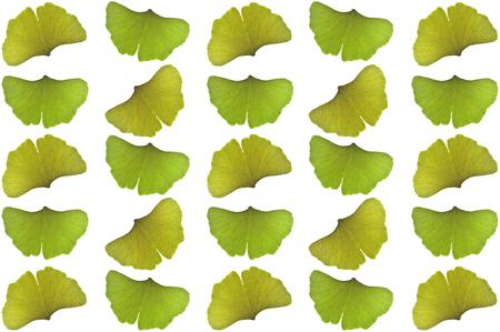 Ginkgo leaves, Ginkgo biloba, on white background