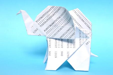 White origami elephant on blue background 版權商用圖片
