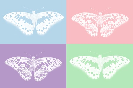 Top and bottom view of lime butterfly, Papilio demoleus, on colorful background