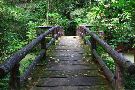Concrete bridge in the forest photo