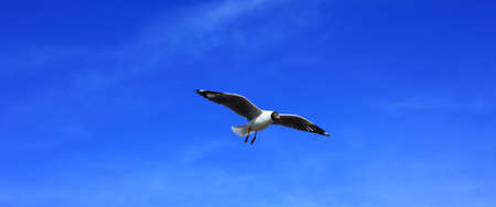 seagull and blue sky