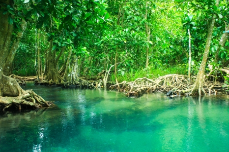 thapom: Khlong Song Nam clear tropical stream,krabi,thailand