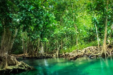 Khlong Song Nam clear tropical stream,krabi,thailand photo