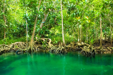 Khlong Song Nam clear tropical stream,krabi,thailand Stock Photo - 19600850