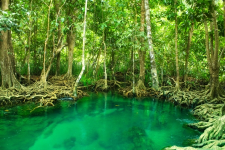 Khlong Song Nam clear tropical stream,krabi,thailand Stock Photo - 19600854
