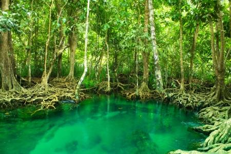 Khlong Song Nam clear tropical stream,krabi,thailand