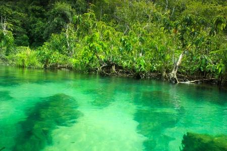 Khlong Song Nam clear tropical stream,krabi,thailand Stock Photo - 19600845