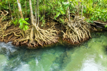 Khlong Song Nam clear tropical stream,krabi,thailand Stock Photo - 19600853