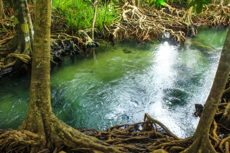 Khlong Song Nam clear tropical stream,krabi,thailand Stock Photo - 19600829