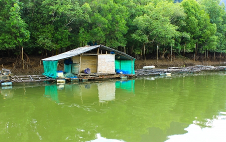 Mini house and stone mountain in the mangrove swamp photo