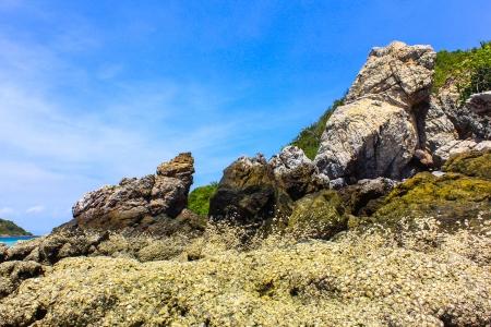 hill into the sea water at coral island or Koh Larn ,Pattaya Thailand