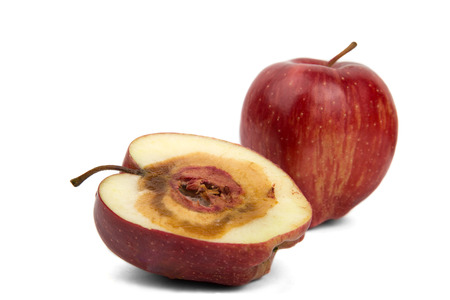 rotten sliced red apple on a white background photo