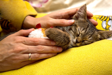 caresses: girl caresses cute sleeping kitten Stock Photo