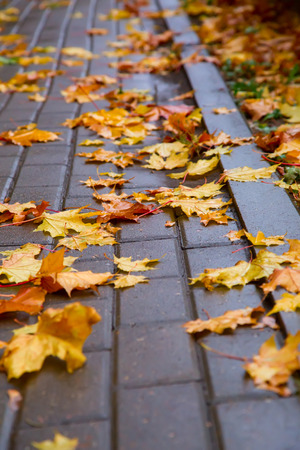 autumn leaves on a wet block stone photo