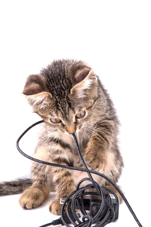 little gray striped kitten chews on the cord of the charger on a white background