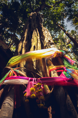 Big Bodhi tree tied with colorful cloths as a token of sacred tree