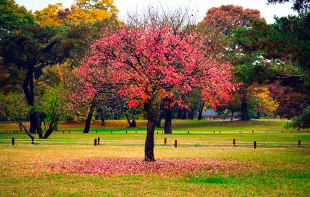 discolored: green field and pink tree Stock Photo