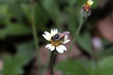 bee on flora Stock Photo - 11547189