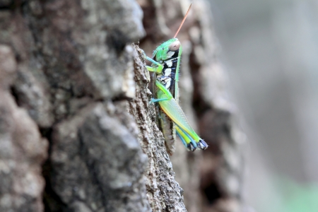 grasshopper Stock Photo - 15429475