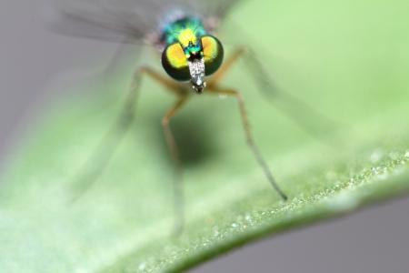 Robberfly photo