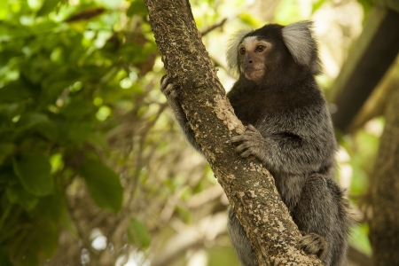 Marmoset Monkey on Branch Stock Photo - 17041273
