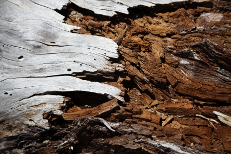 Decaying wood photo