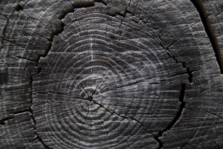 Close up of tree trunk rings photo