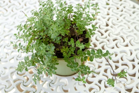 flower pot on table in the garden Stock Photo - 17084061