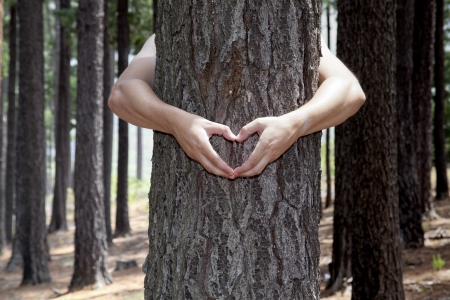 man making heart shape with his hands around a tree photo