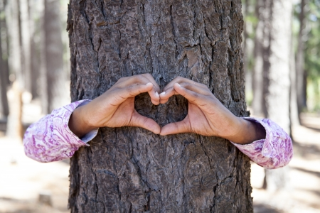 hands making an heart shape on a trunk of a tree. Great ecology concept