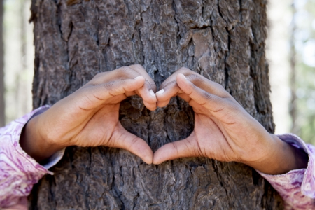 hands making an heart shape on a trunk of a tree. Great ecology concept  photo