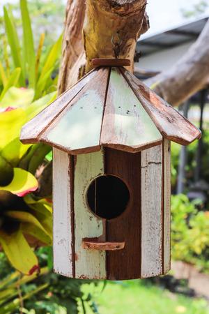 maison oiseau: maison d'oiseau sur l'arbre