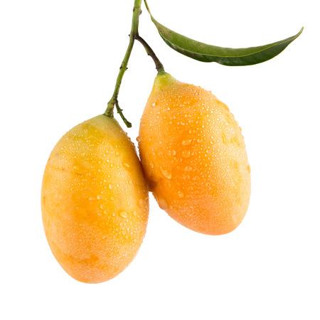 hojas de arbol: dulce de ciruela Marian fruta tailandesa aislada en el fondo blanco (Mayongchid Maprang Marian ciruela y ciruela Mango, Tailandia)