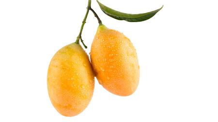 mango: Marian plum tajski słodki owoc na białym tle (Mayongchid Maprang Marian Plum Plum Mango, Tajlandia) Zdjęcie Seryjne