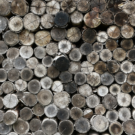 timber industry: stacked timber logs as background. Stock Photo