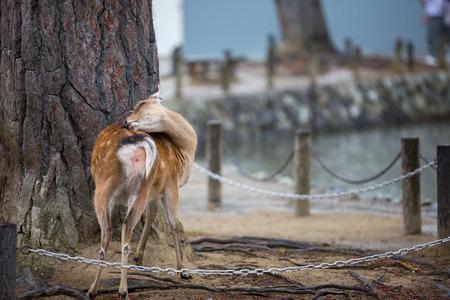 Deer in the rain day