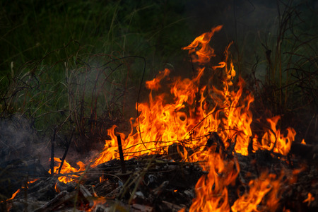 Burning down fire. Last embers and ashes.