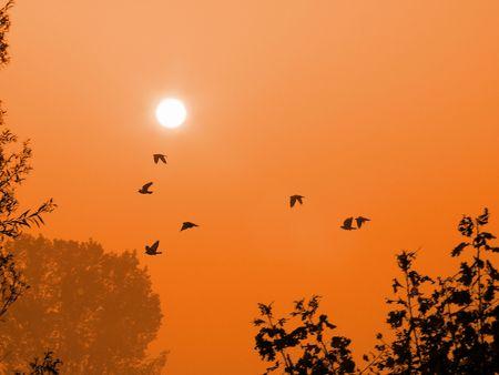 A flock of birds at dawn