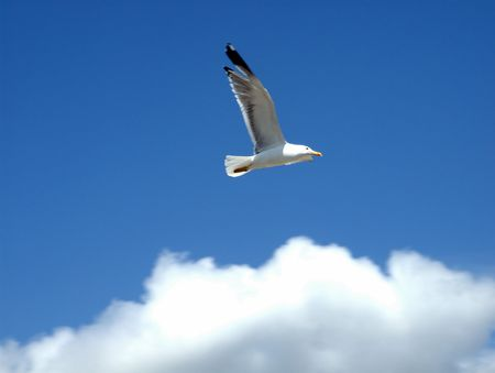 A lone seagull fly over the clouds