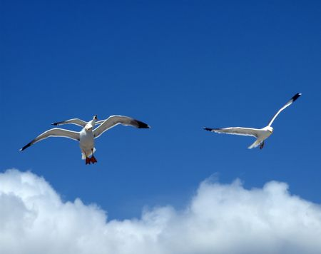 A flock of seagulls in pose for the photographer.