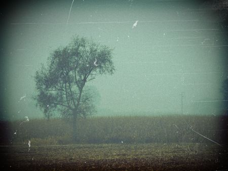 Background useful for halloween projects or creepy landscapes