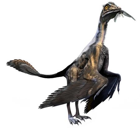始祖鳥の 3 D 図