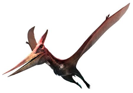 Pteranodon 3D illustration Stock Photo