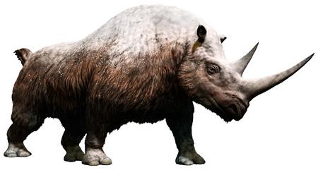 Woolly rhinoceros Stock Photo