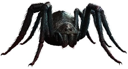 자이언트 거미